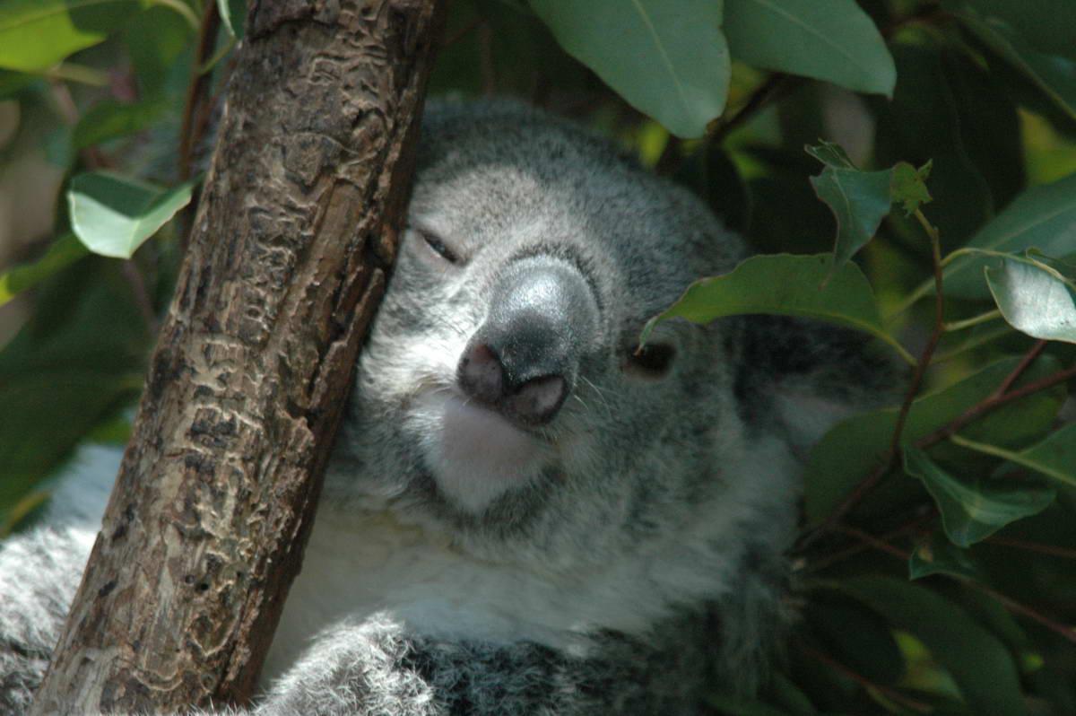 Australia-Cairns_0251